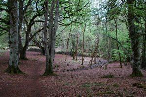 portumna_forest_park1